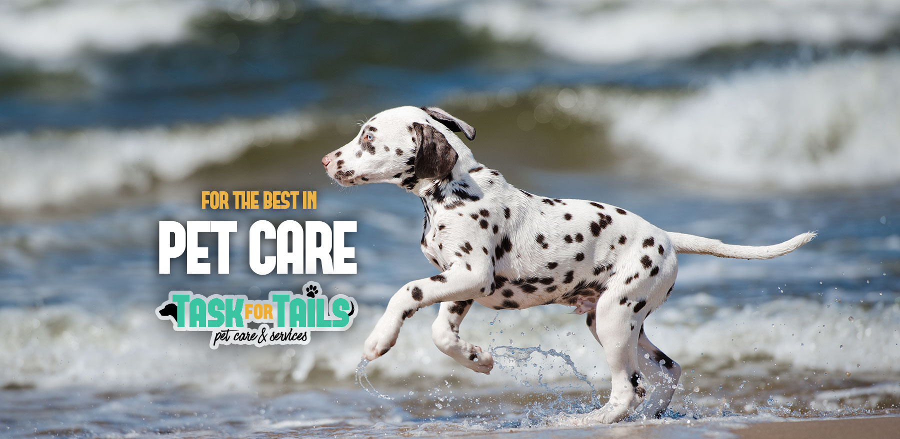 Best Pet Sitting Service in Charleston SC