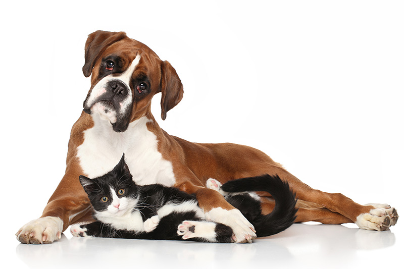 why us   task for tails pet care charleston sc